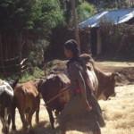 Bekelu Merga of Ethiopia received $200.00 to purchase fertilizer and seed.