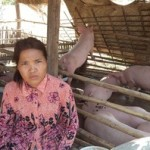 Heab of Cambodia received $550.00 to buy piglets and pig feed.