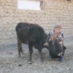Mokhira of Kyrgyzstan received $475.00 to buy sheep.