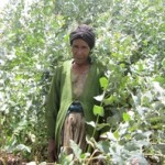 Wude of Ethiopia received $250.00 to purchase fertilizer and selected seed.