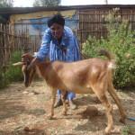 Tolashi of Ethiopia received $250 to purchase fertilizer.