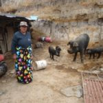 $675 was loaned to Carmen to buy more pigs, feed, and supplements