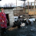 Larisa from Moldova received a loan of $1,000 to rebuild a stable for pigs and chickens.