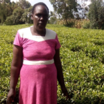 Elizabeth in Kenya received a loan of $425 to buy inputs for her tea farm to increase her yield.
