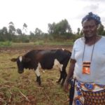 Our $500 loan to Doricas in Kenya will be used to buy fertilizers for her maize and dairy farm business.