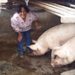 Our loan of $300 to Edy Esmeralda in Ecuador will help her buy more pigs, feed, potatoes, supplements and vitamins for her pig rearing business.